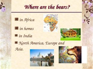 Where are the bears? in Africa in homes in India North America, Europe and As
