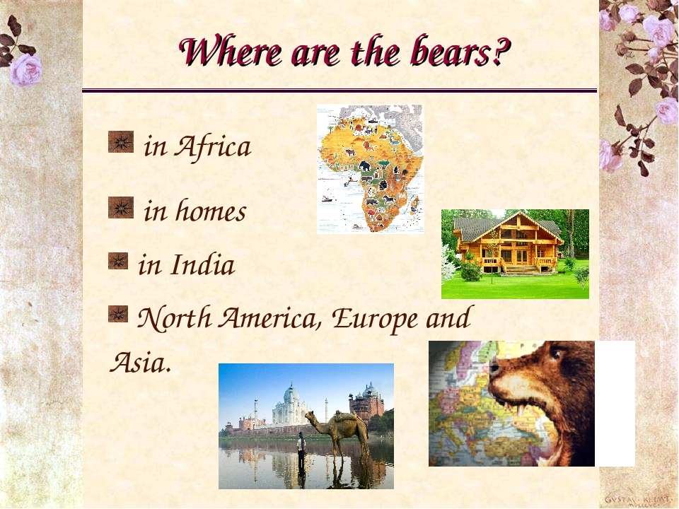Where are the bears? in Africa in homes in India North America, Europe and As...