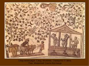 Сбор винограда. Свод. Мозаика. Середина IV века. Рим. Мавзолей Санта-Костанца