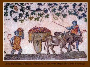 Сбор винограда, Мозаика. Фрагмент. IV век. Рим. Мавзолей Санта-Костанца