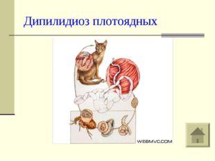 Дипилидиоз плотоядных