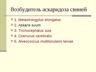 Возбудитель аскаридоза свиней 1. Metastrongylus elongatus 2. Askaris suum 3.