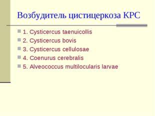 Возбудитель цистицеркоза КРС 1. Cysticercus taenuicollis 2. Cysticercus bovis