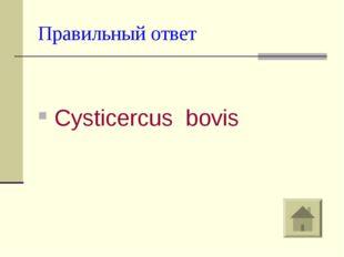 Правильный ответ Cysticercus bovis