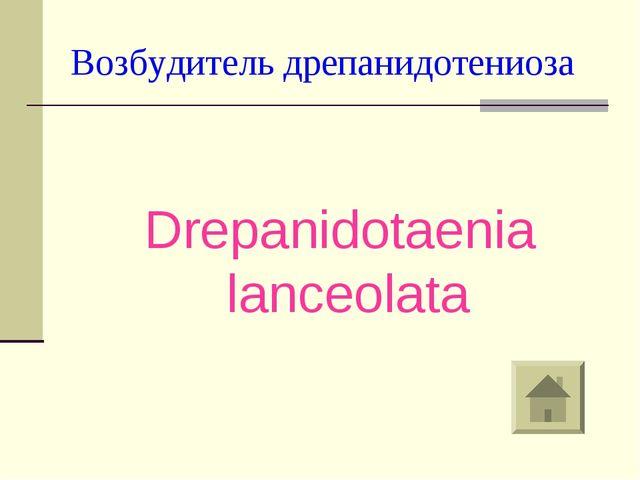 Возбудитель дрепанидотениоза Drepanidotaenia lanceolata