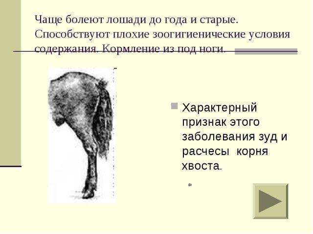 Чаще болеют лошади до года и старые. Способствуют плохие зоогигиенические усл...