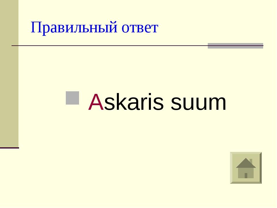 Правильный ответ Askaris suum