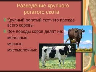 Разведение крупного рогатого скота Крупный рогатый скот-это прежде всего кор