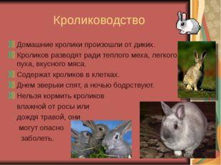 Кролиководство Домашние кролики произошли от диких. Кроликов разводят ради т