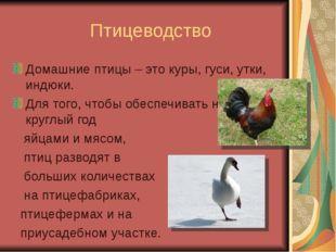 Птицеводство Домашние птицы – это куры, гуси, утки, индюки. Для того, чтобы