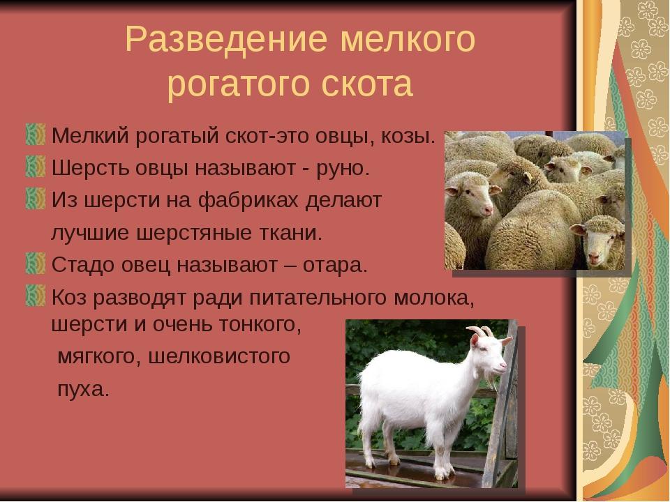 Разведение мелкого рогатого скота Мелкий рогатый скот-это овцы, козы. Шерсть...