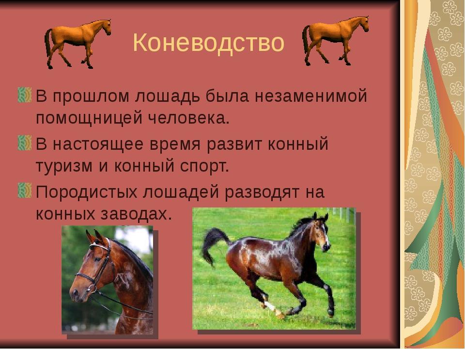 Коневодство В прошлом лошадь была незаменимой помощницей человека. В настоящ...