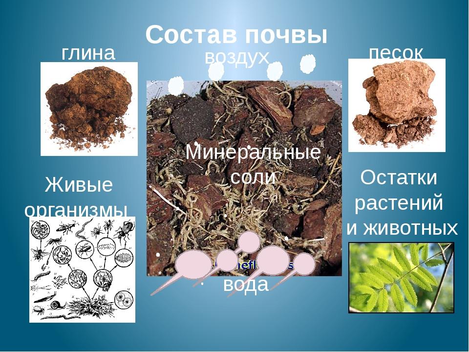 Состав почвы глина песок Живые организмы Остатки растений и животных вода воз...