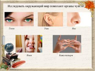 . Исследовать окружающий мир помогают органы чувств: Глаза Уши Нос Язык Кожа