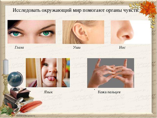 . Исследовать окружающий мир помогают органы чувств: Глаза Уши Нос Язык Кожа...