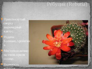 Приплюснутый сверху шаровидный кактус. Родина: Боливия,Аргентина. Местоположе