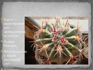 Кактус с шарообразным или цилиндрическим стеблем. Родина: Мексика. Местополож