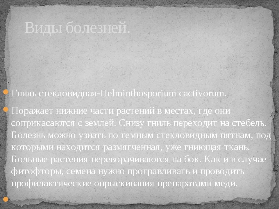 Виды болезней. Гниль стекловидная-Helminthosporium cactivorum. Поражает нижни...