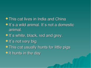 This cat lives in India and China It`s a wild animal. It`s not a domestic ani