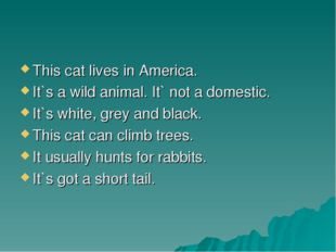 This cat lives in America. It`s a wild animal. It` not a domestic. It`s white