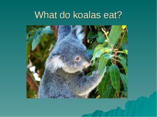 What do koalas eat?