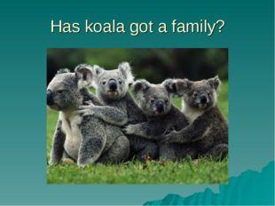 Has koala got a family?