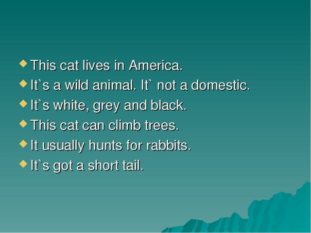 This cat lives in America. It`s a wild animal. It` not a domestic. It`s white...