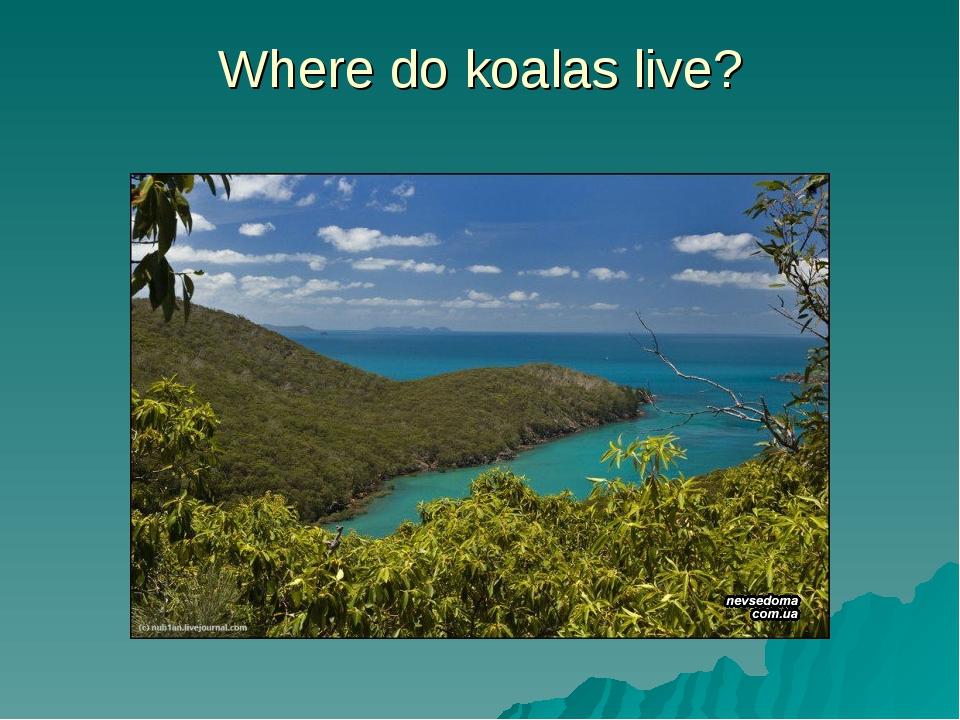 Where do koalas live?