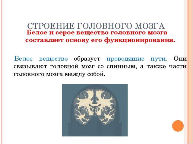 СТРОЕНИЕ ГОЛОВНОГО МОЗГА Белое и серое вещество головного мозга составляет ос...