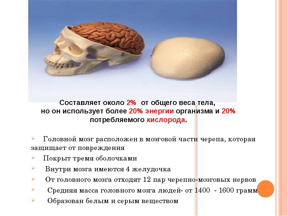 Головной мозг расположен в мозговой части черепа, которая защищает от повреж...