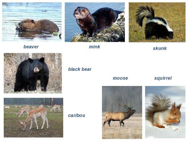 beaver mink skunk black bear caribou moose squirrel