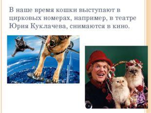 В наше время кошки выступают в цирковых номерах, например, в театре Юрия Кукл