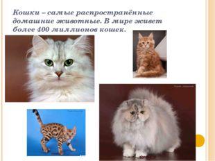 Кошки – самые распространённые домашние животные. В мире живет более 400 милл