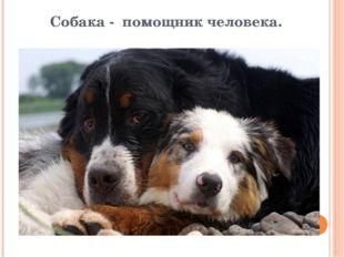 Собака - помощник человека.