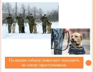 Полиции собаки помогают находить по следу преступников.