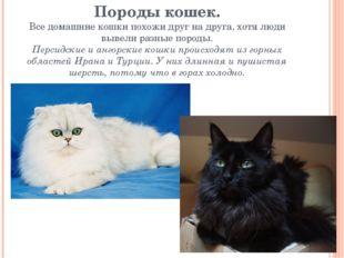 Породы кошек. Все домашние кошки похожи друг на друга, хотя люди вывели разны