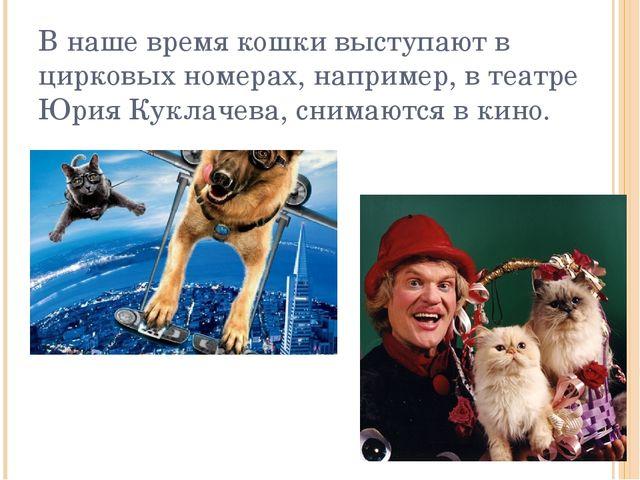 В наше время кошки выступают в цирковых номерах, например, в театре Юрия Кукл...