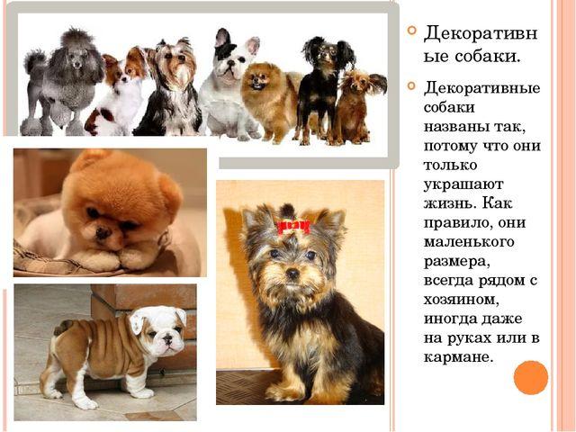 Декоративные собаки. Декоративные собаки названы так, потому что они только у...