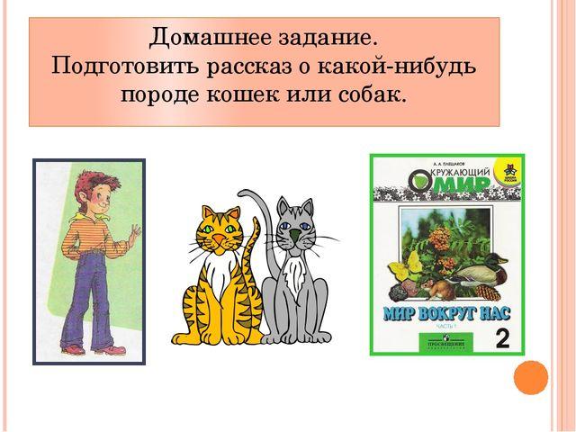 Домашнее задание. Подготовить рассказ о какой-нибудь породе кошек или собак.