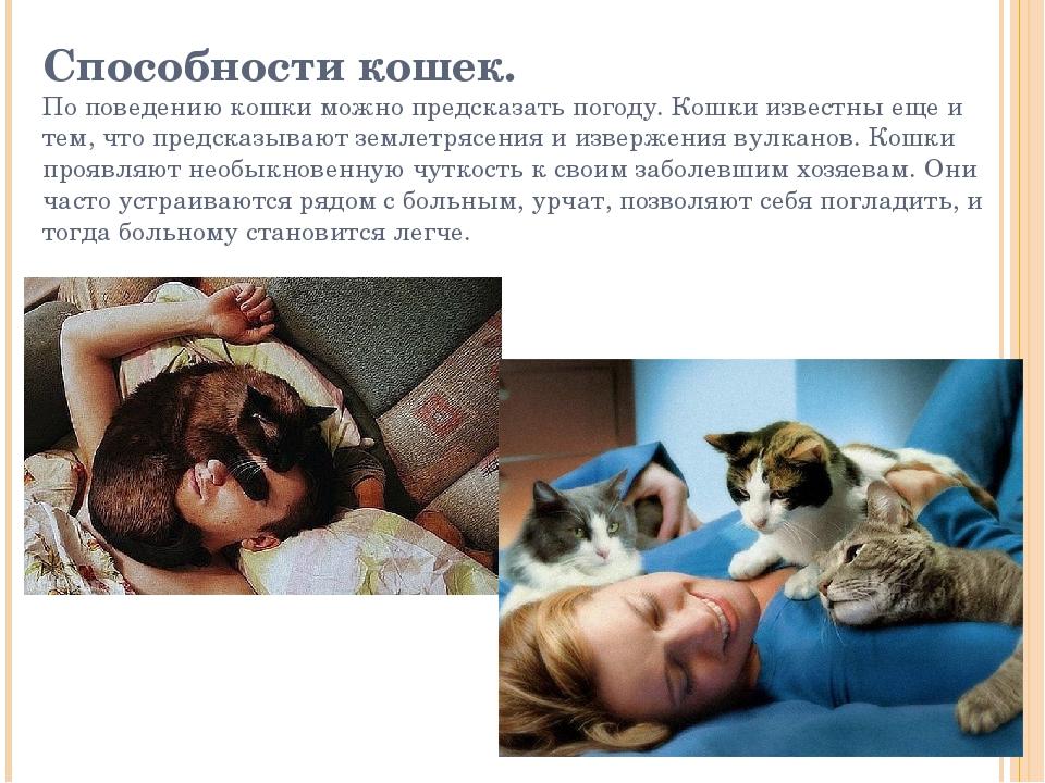 Способности кошек. По поведению кошки можно предсказать погоду. Кошки известн...
