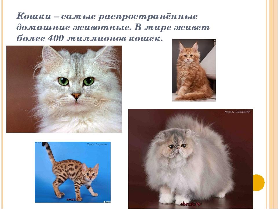 Кошки – самые распространённые домашние животные. В мире живет более 400 милл...