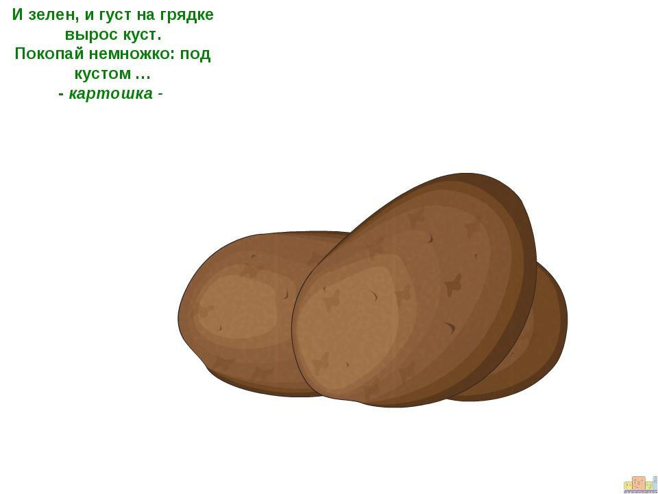 И зелен, и густ на грядке вырос куст. Покопай немножко: под кустом … - картош...