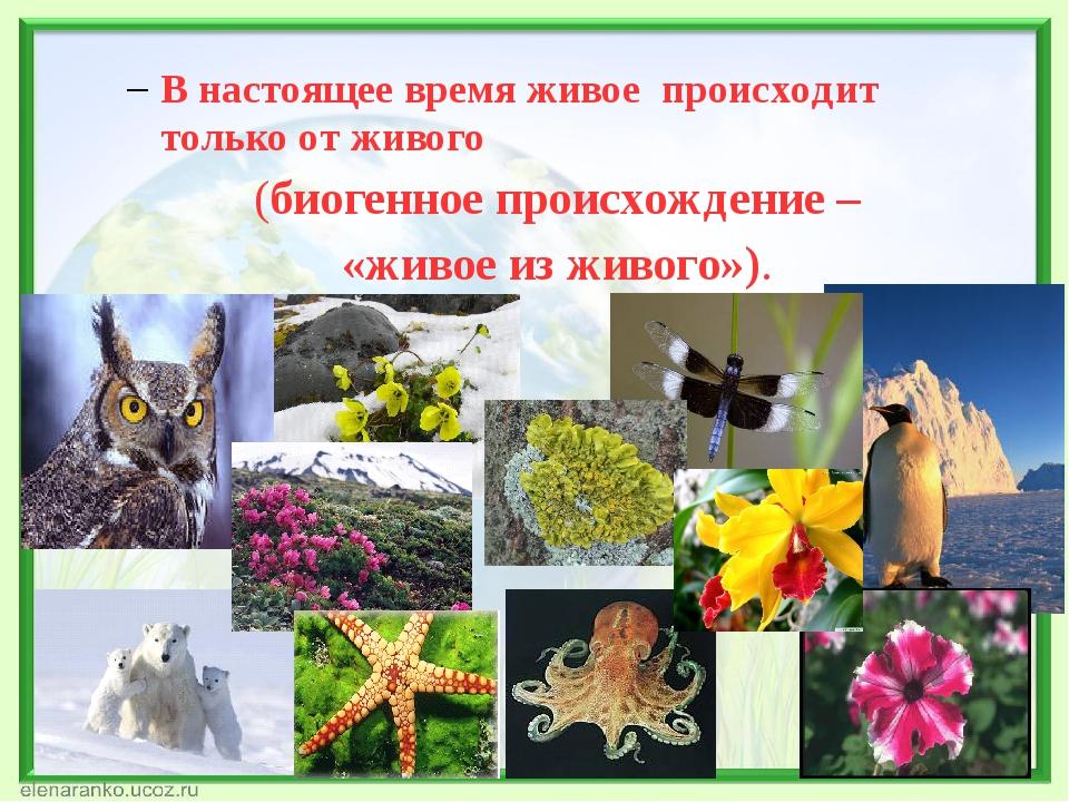 В настоящее время живое происходит только от живого (биогенное происхождение...