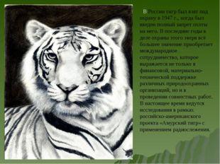 В России тигр был взят под охрану в 1947 г., когда был введен полный запрет