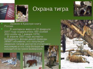 Охрана тигра Занесен в Красную книгу России. В зоопарках мира на 20 февраля