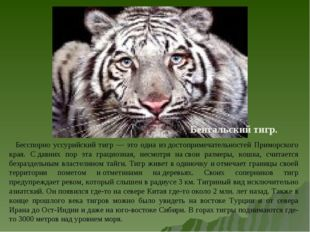 Бенгальский тигр. Бесспорно уссурийский тигр — это одна издостопримечательно