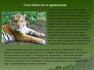 Способности и привычки. Тигр в состоянии всего лишь одним прыжком покрыть 9 м