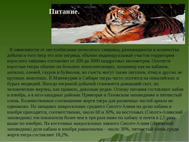 В зависимости от местообитания полосатого хищника, разновидности и количеств...