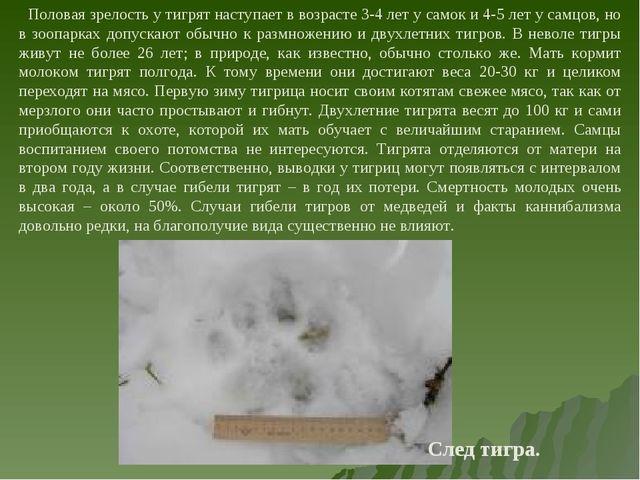 Половая зрелость у тигрят наступает в возрасте 3-4 лет у самок и 4-5 лет у с...