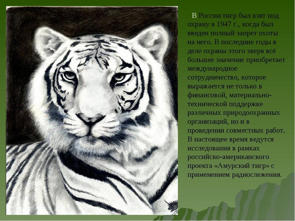В России тигр был взят под охрану в 1947 г., когда был введен полный запрет...